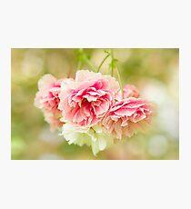 Cherry Blossom Frills Photographic Print