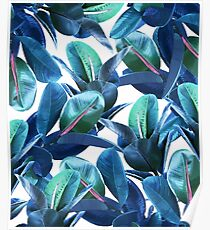 Rubber Plant #redbubble #lifestyle Poster