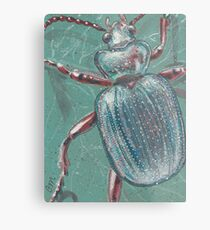 Shiny Beetle Metal Print