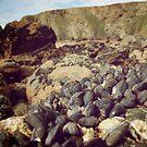 sea mussels 4 by Lemon-zombie