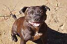Happy Staffie by Elaine Teague