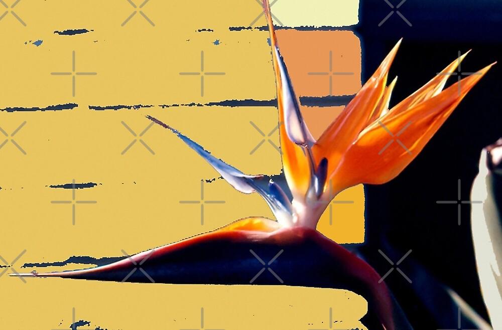 Funky Bird-of-Paradise by mistyrose
