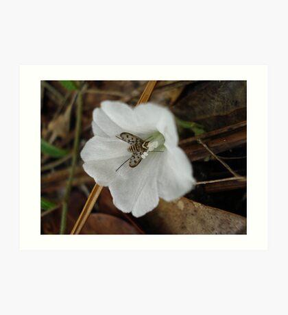 Beefly in Creeping Wildflower Art Print