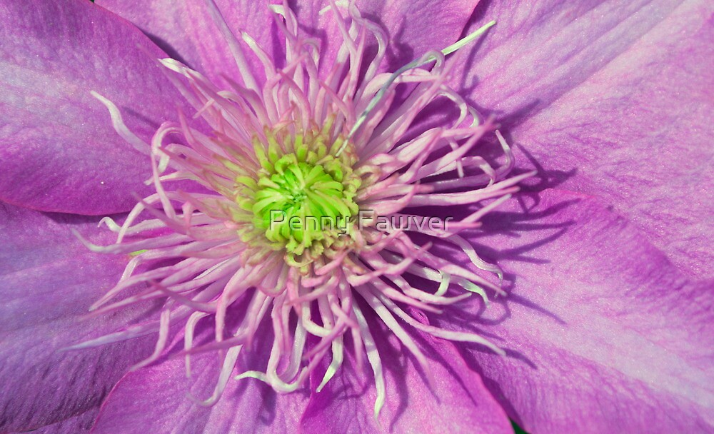 Pink with a touch of green by Penny Fawver