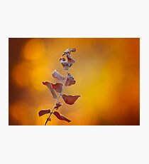 Fire Light Photographic Print