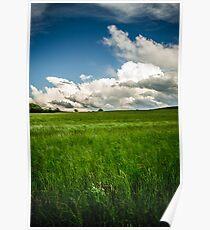 Green Green Grass Poster