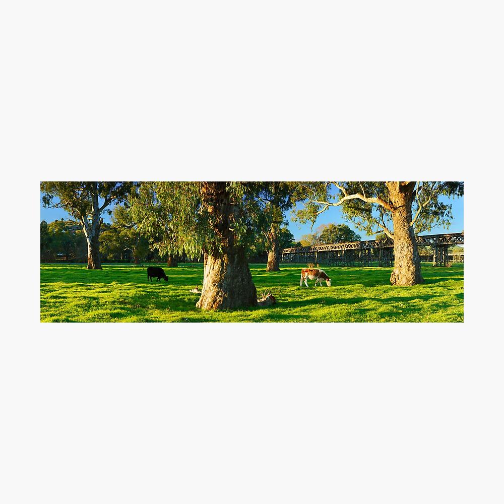 Gundagai Trestle Bridge, New South Wales, Australia Photographic Print