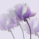Roses in Purple by Rosalie Scanlon