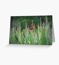 Relaxing Red. Greeting Card