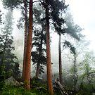 Trees in the Fog by Luann wilslef