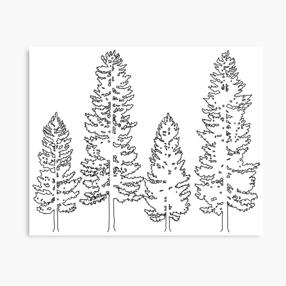 Pine Trees  Canvas Print