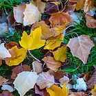 Fallen leaves by indiafrank