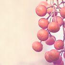 Autumn Orange Berries by Alana Stewart Photography