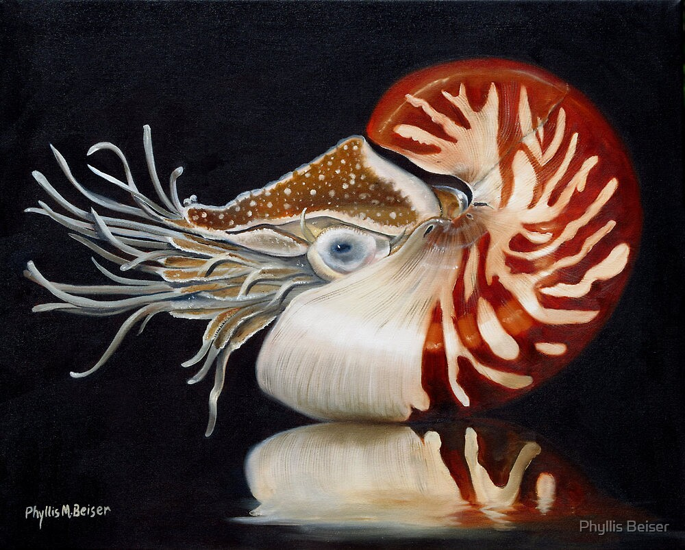 A Nautilus Study by Phyllis Beiser