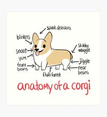 Anatomy of a Corgi Art Print