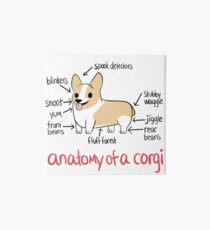 Anatomy of a Corgi Art Board