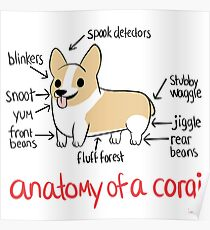 Anatomy of a Corgi Poster