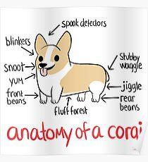 Anatomy of a Corgi Poster
