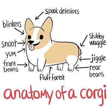 Anatomía de un Corgi de alyssadyerart