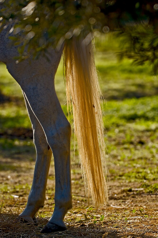 Golden horse-tail by Konstantinos Arvanitopoulos