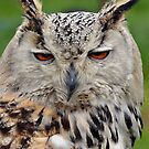 Eagle Owl by Carol Bleasdale