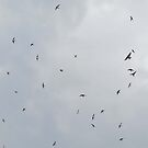 Flight Of The Sand Martins by CreativeEm