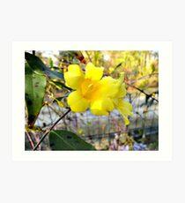 Yellow Carolina Jasmine Art Print