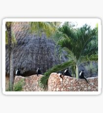 Colobus Monkey resting on a wall Sticker