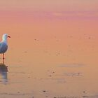 Sunset Beach by Jade Welch