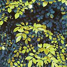 Foliage Hues - Dark Blue And Green by Shawna Rowe