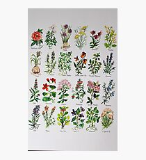 Herbal Alphabetical Watercolor Photographic Print