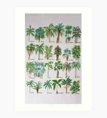 Lámina artística Alfabeto acuarela de árbol de Palma