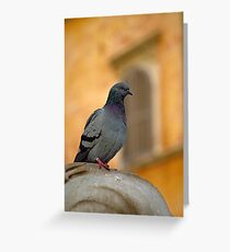 Posing Pigeon Greeting Card