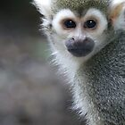 Squirrel monkey, sapajou jaune by Yves Roumazeilles