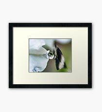 Last Touch Framed Print
