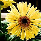 Gerber Daisy art deco by Jackie Popp