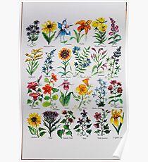 Wildflower-Alphabet Poster