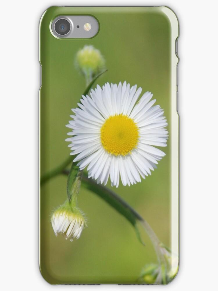 Daisy flower on green grass by valeriedesign