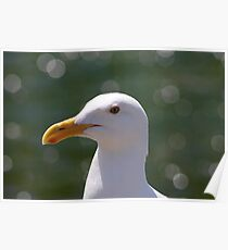 Seagull an the Orbs Poster