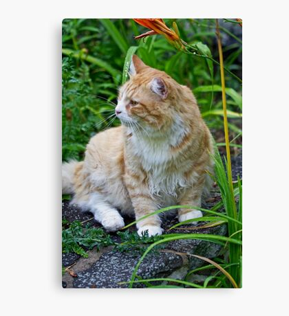BobCat Among The Flowers Canvas Print