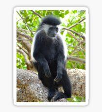 Colobus Monkey sitting in a tree 2 Sticker