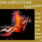 SUBMISSION FEATURE BANNER - SHADOWS & REFLECTIONS by Magriet Meintjes