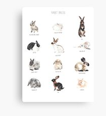 Rabbit Breeds Canvas Print