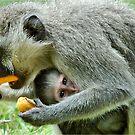GROWN-UPS ALWAYS GETS THE BEST - Vervet Monkey, (CERCOPITHECUS PYGERYTHRUS) BLOU AAP by Magriet Meintjes