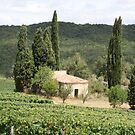 Vineyard near Carcassonne  -  Southern Fance by Ben Bugarach