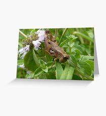 happy hopper  Greeting Card