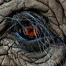 Elephant eye by Anton Alberts