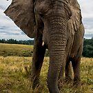 Big Ears by Anton Alberts