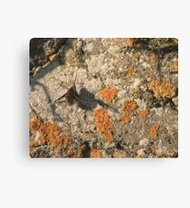 Narbee Canvas Print
