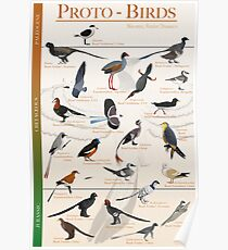 Proto-Birds Poster Poster